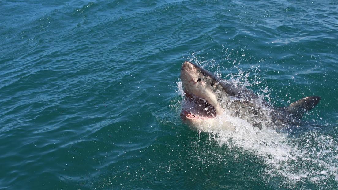 Un tiburón blanco mata a una joven de 19 años en Nueva Zelanda