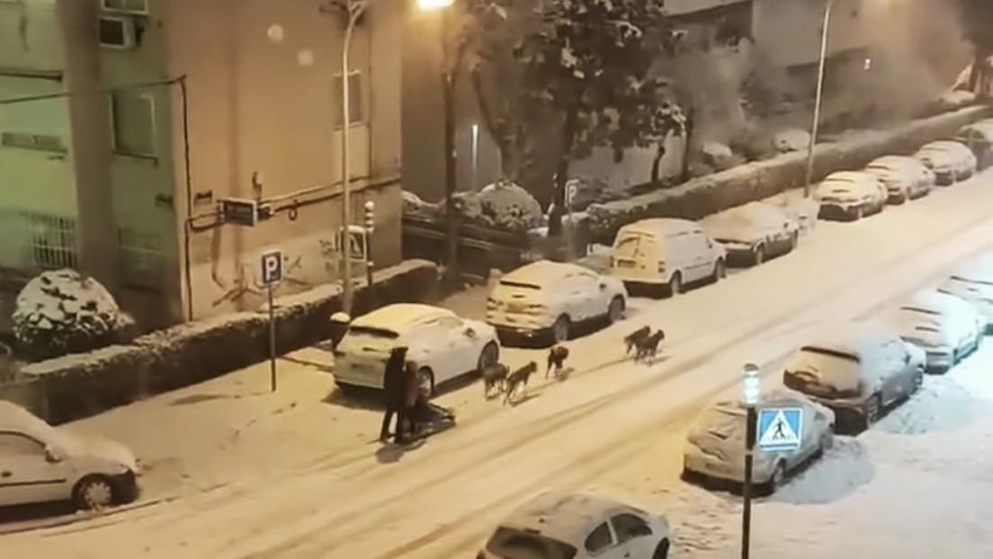 Hombre se pasea por Madrid en un trineo tirado por perros en medio de una histórica nevada