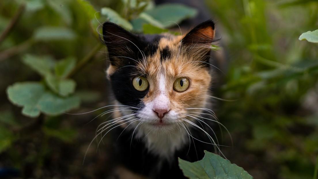 Investigan en España a una joven que se grabó lanzando un gato desde un barranco y bailando después