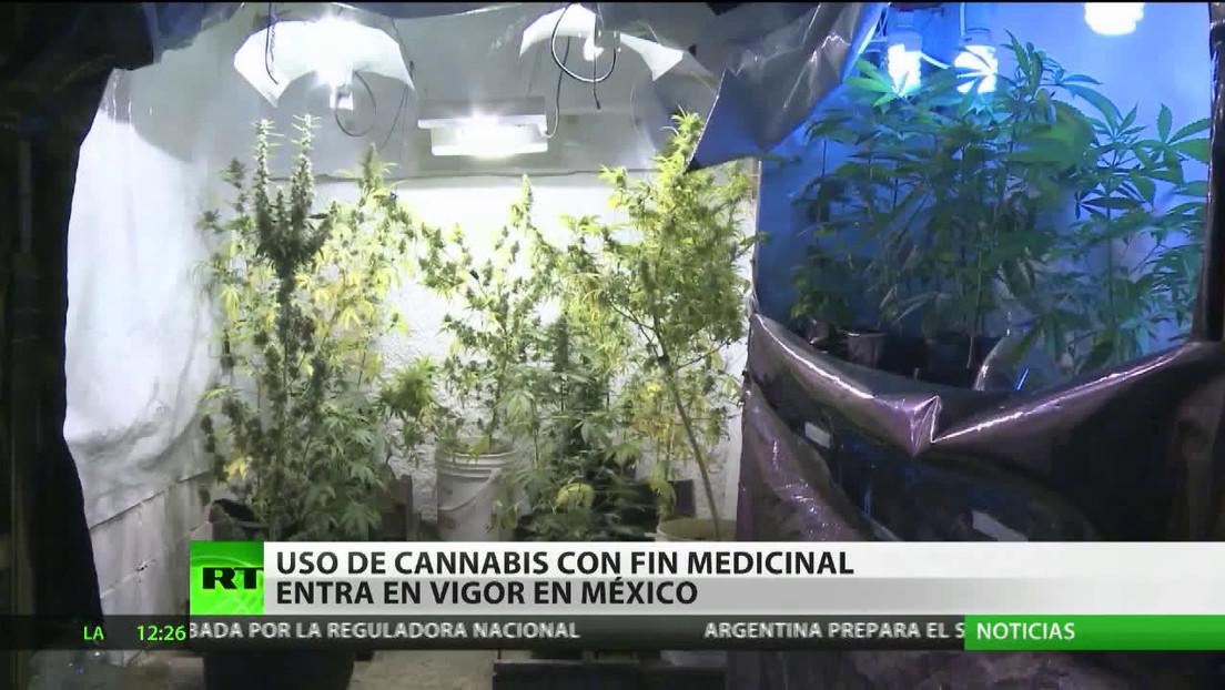 Uso del cannabis con fines medicinales entra en vigor en México