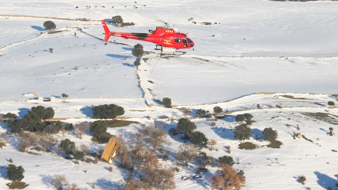 VIDEO: Alimentan desde un helicóptero a 400 animales que habían quedado aislados por la histórica nevada