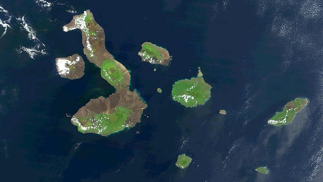 Científicos resuelven el secreto del rico ecosistema de las Islas Galápagos