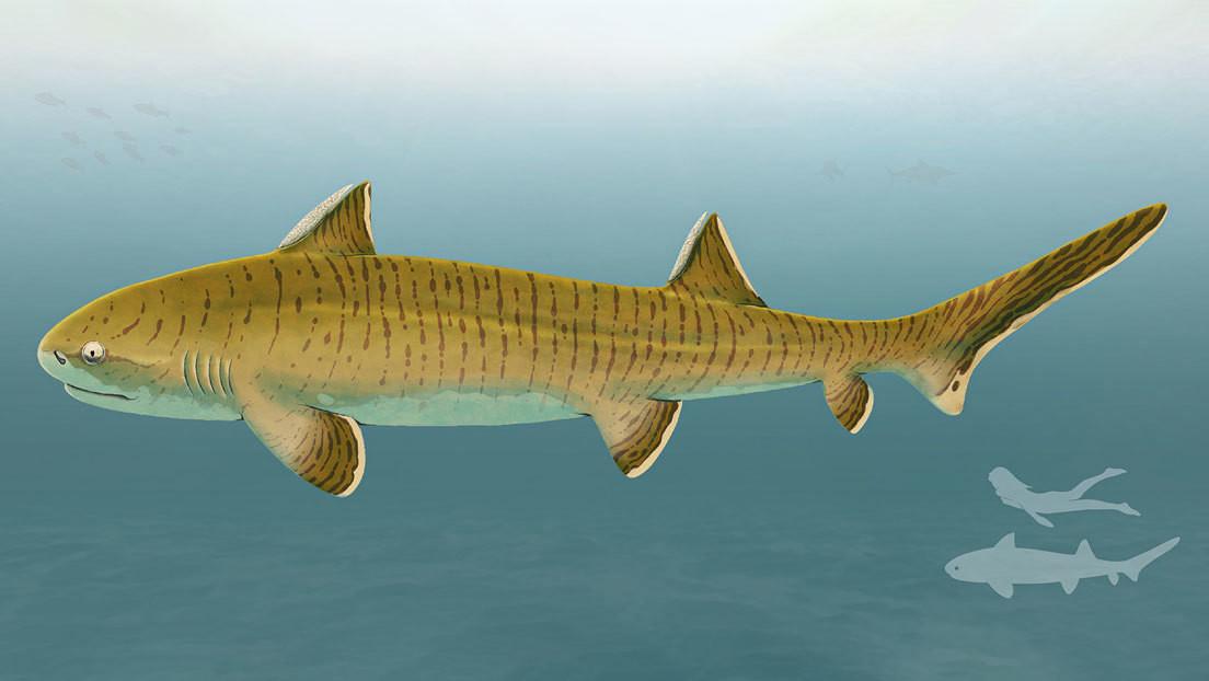 """Describen un gran tiburón del Jurásico a partir de un fósil """"casi completo"""" hallado en Alemania"""