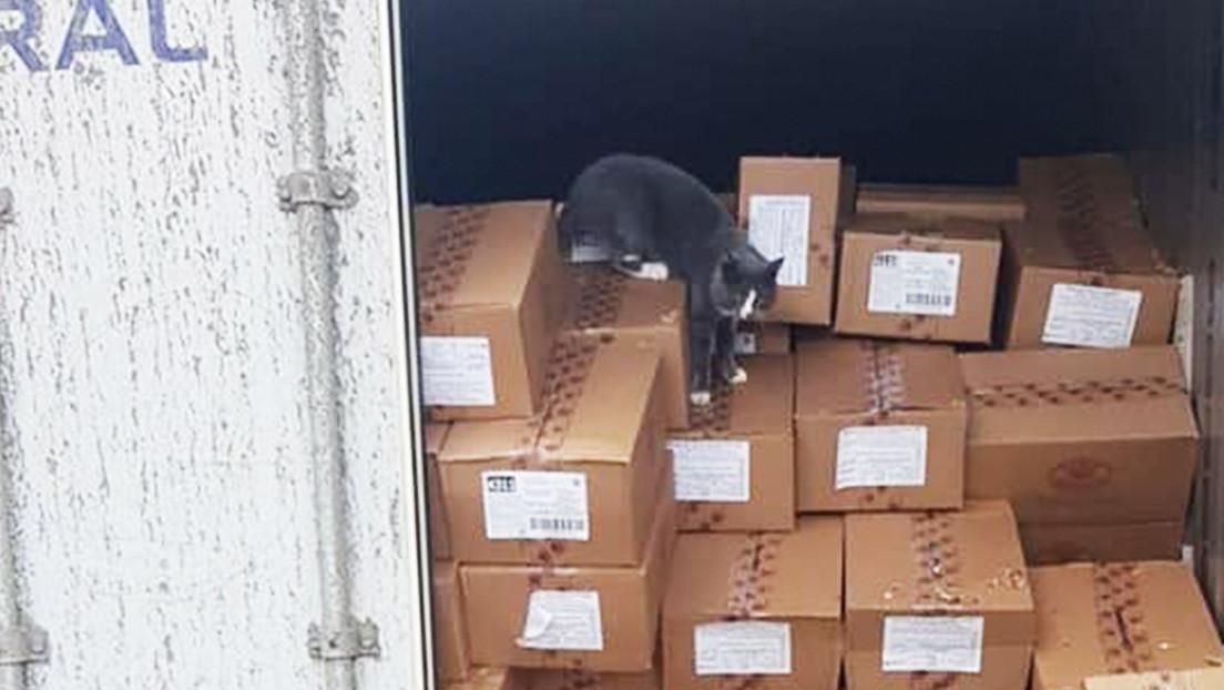 Un gato sobrevive a 3 semanas dentro de un contenedor en alta mar comiendo bombones