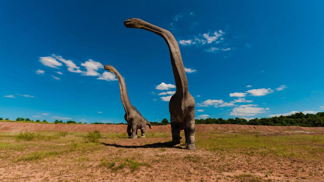 Los fósiles de un dinosaurio hallados en Argentina podrían pertenecer al animal más grande que pisó la Tierra