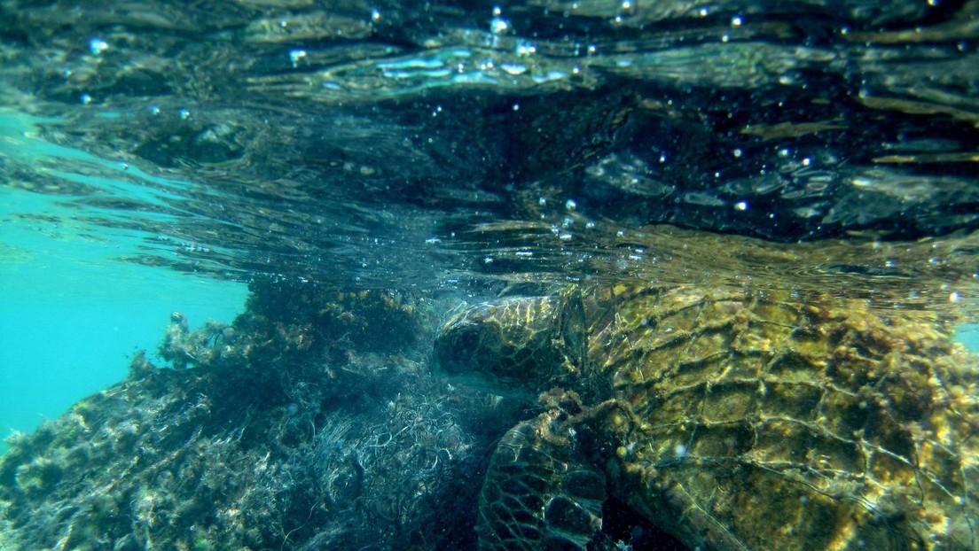 ¿Misterio resuelto?: Profesor de EE.UU. sugiere que el monstruo del lago Ness puede ser una antigua tortuga marina