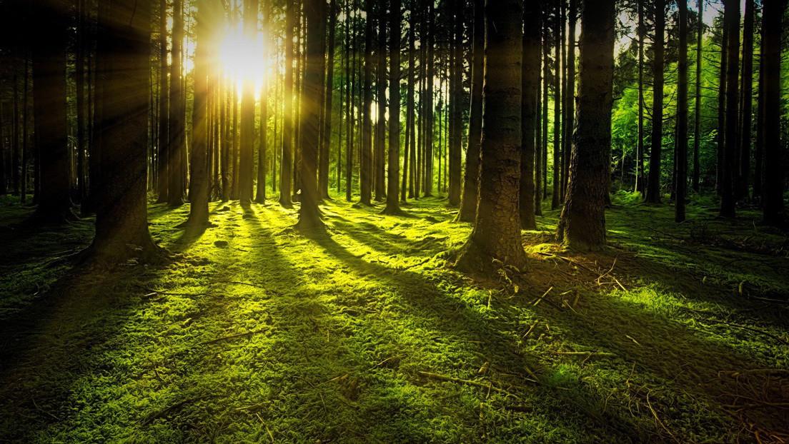 Reconstruyen todos los ciclos de actividad solar desde el año 969 d. C. por los anillos de árboles