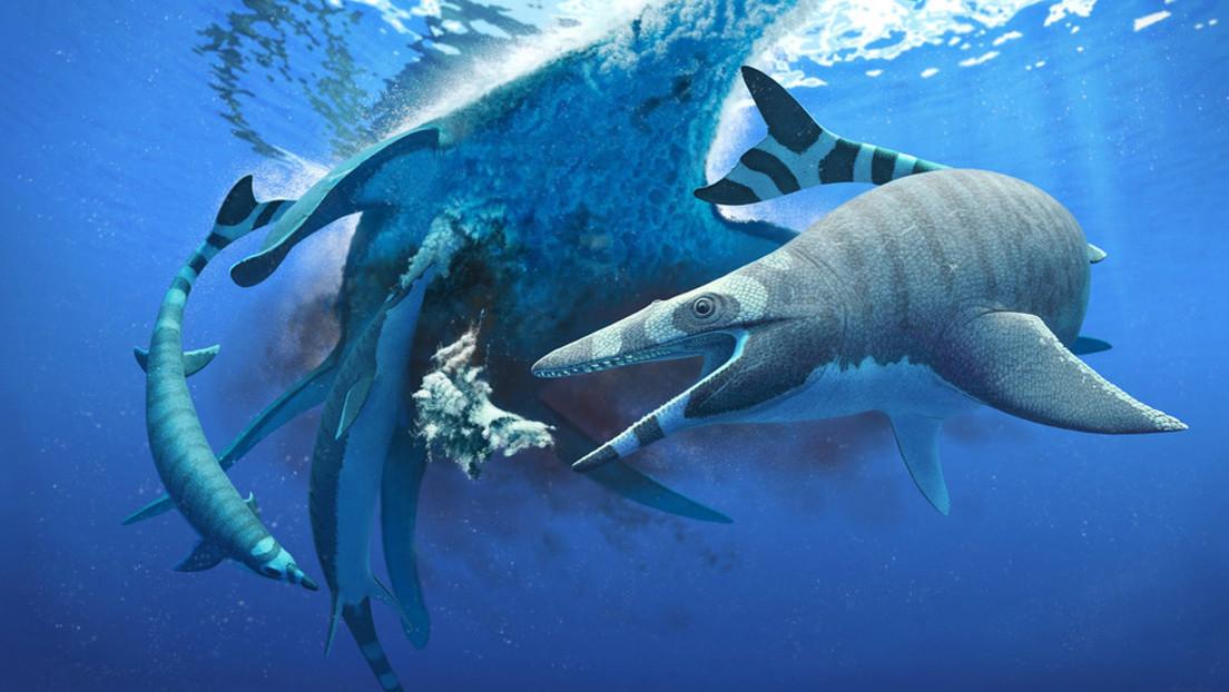 Identifican un lagarto marino del Cretácico con dientes como los del tiburón que le dotaban de una mordedura mortal