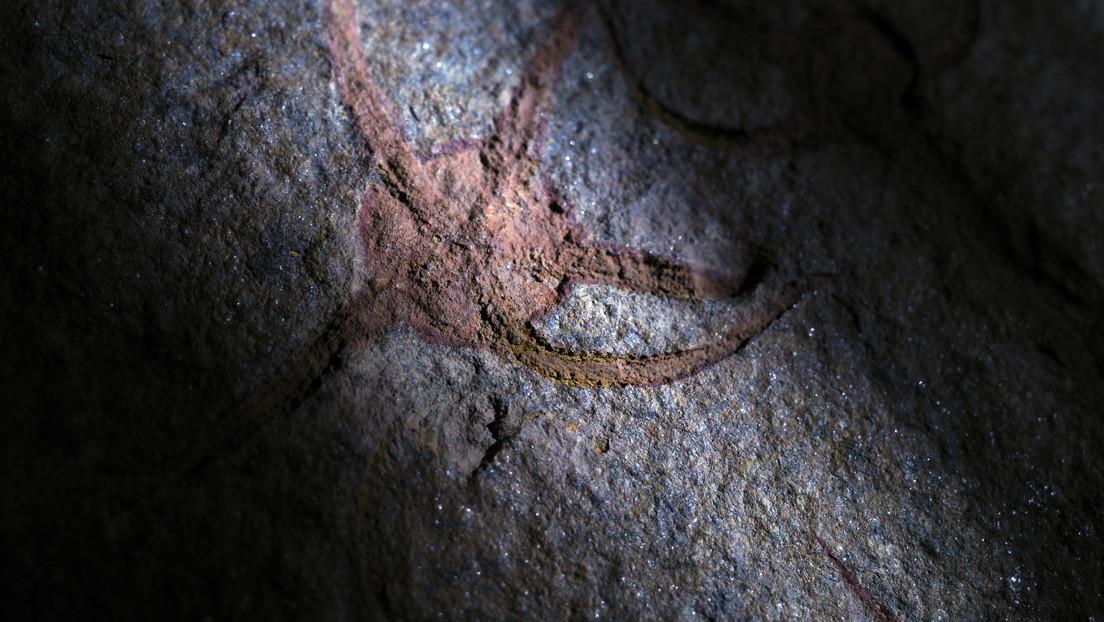 Descubren en Marruecos una estrella de mar fosilizada de hace 480 millones de años