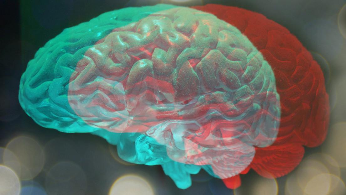 Descubren que los cerebros con características andróginas son más comunes de lo que se creía y tienen sus ventajas