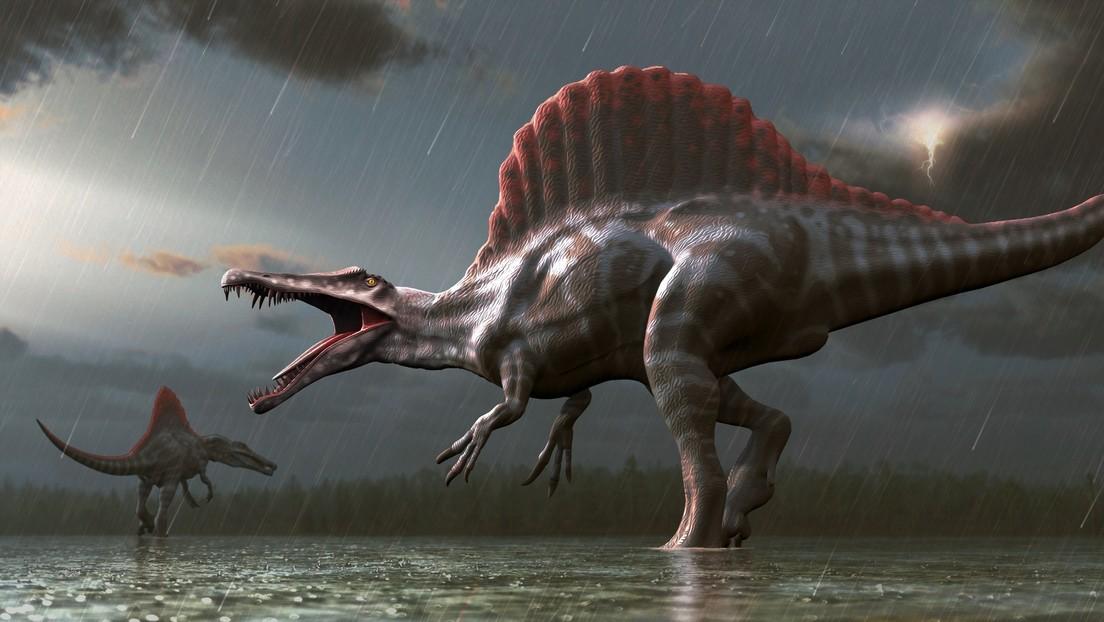 Spinosaurus. Imagen ilustrativa