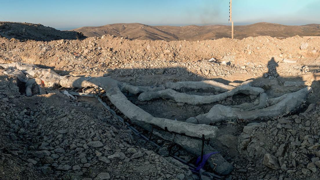 Descubren un árbol petrificado hace 20 millones de años totalmente intacto en la isla de Lesbos (FOTOS)
