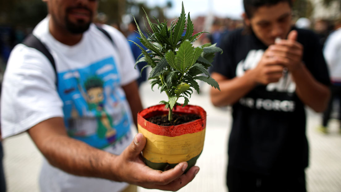 Más marihuana y alcohol y menos drogas psicodélicas: cómo es el consumo de sustancias en Argentina durante la pandemia