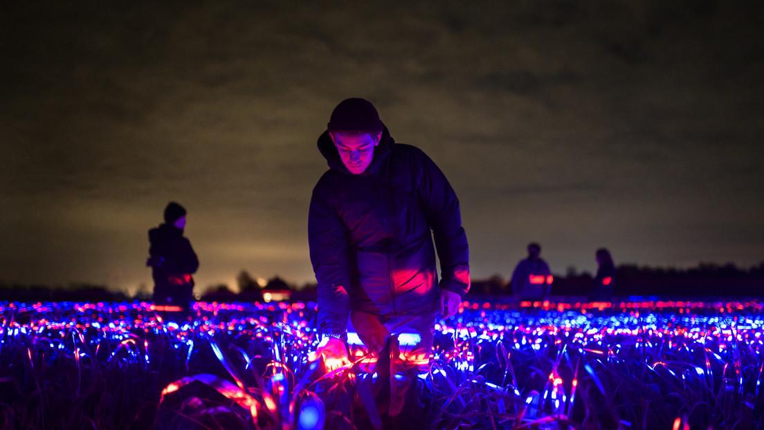 Un artista convierte un campo de puerros en una luminosa obra de arte de 20.000 metros cuadrados (VIDEO, FOTOS)