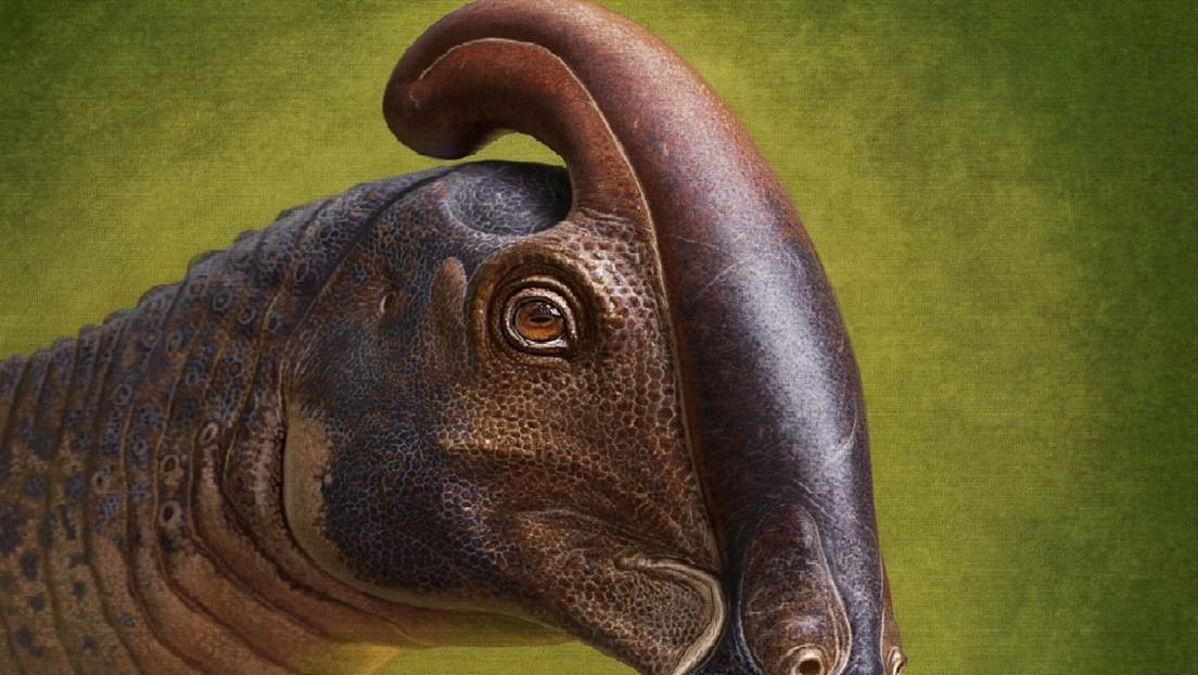 """Reconstruyen por primera vez la apariencia de un dinosaurio pico de pato con una """"extraña"""" cresta tubular que vivió hace más de 70 millones de años"""