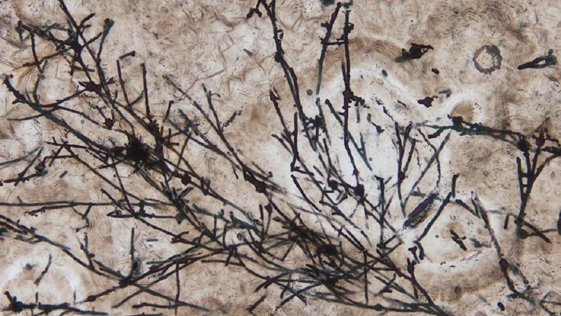 VIDEO: Hallan los organismos terrestres más antiguos jamás detectados, de hace 635 millones de años