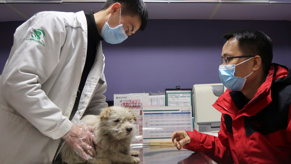 Corea del Sur someterá a pruebas de covid-19 a las mascotas que hayan estado expuestas al coronavirus