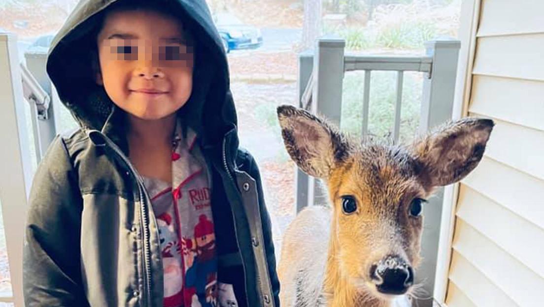 Niño de cuatro años sale a pasear y regresa con un venado como mascota