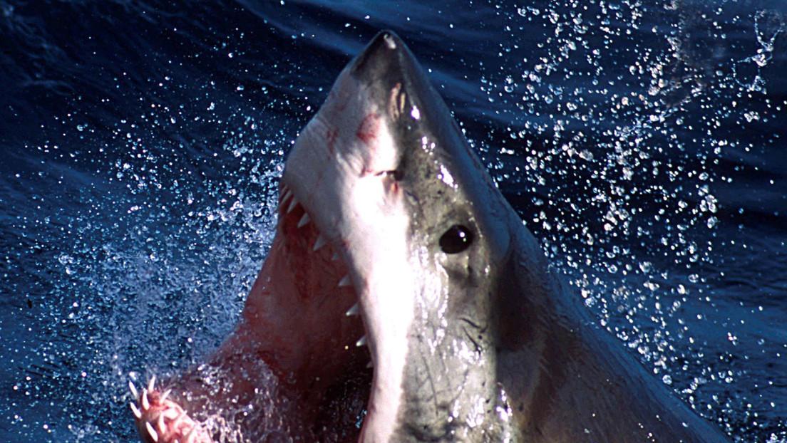 """Un hombre muere tras sufrir un """"episodio médico"""" mientras buceaba y posteriormente es atacado por un tiburón blanco"""