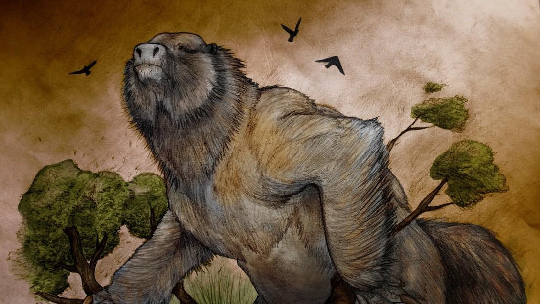 Descubren los restos de un perezoso gigante de más de 3,5 millones de años en Argentina