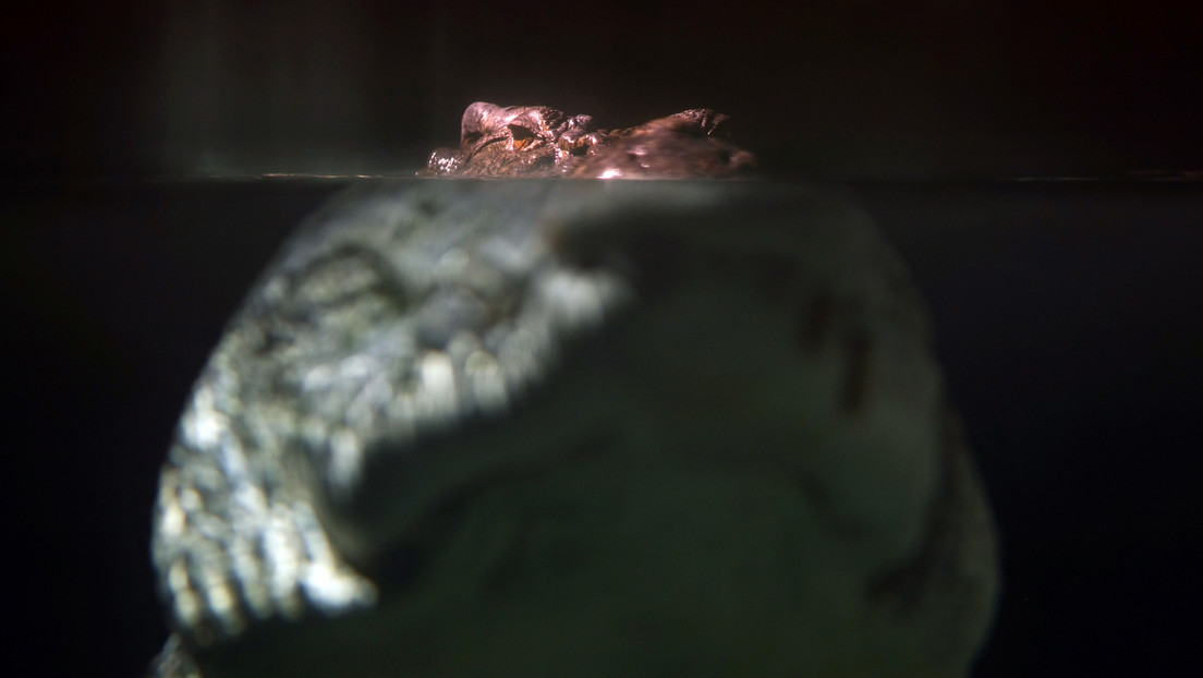 Un hombre sobrevive al ataque de un cocodrilo gracias a un tutorial de YouTube
