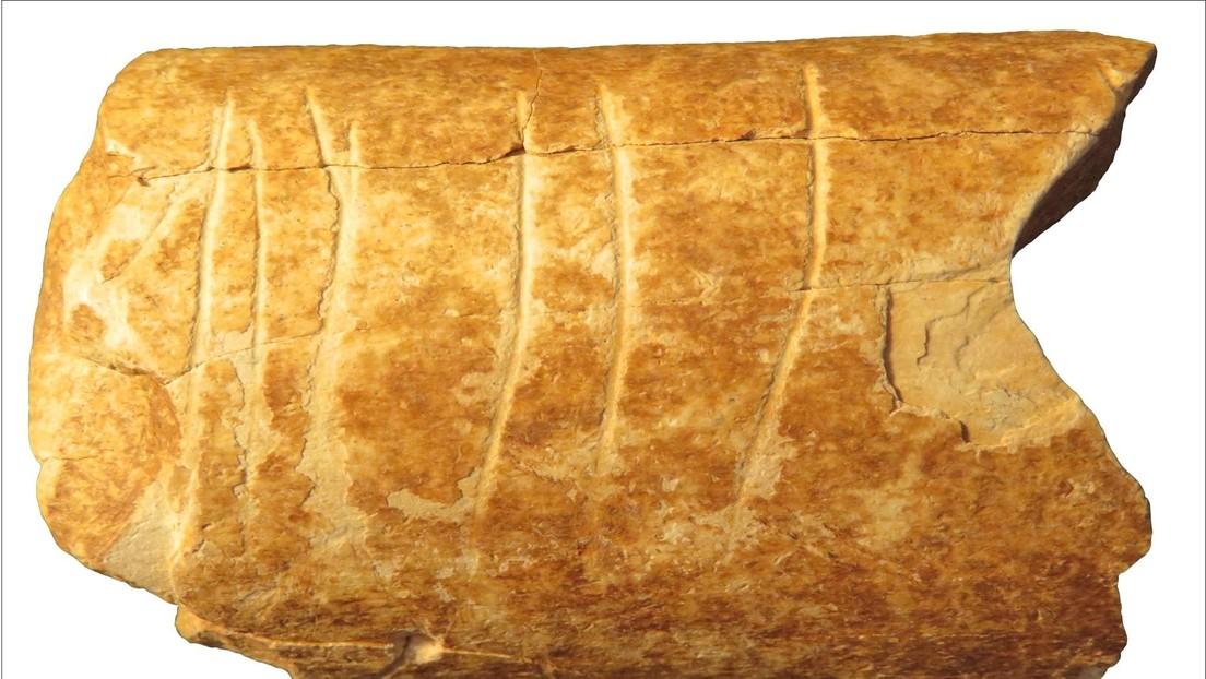 Hallan evidencia del uso humano más antiguo de símbolos en el hueso de una 'vaca' prehistorica