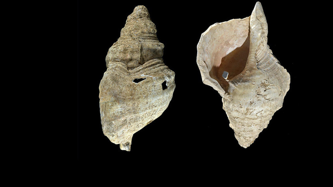 AUDIO: Una caracola marina usada como instrumento de viento suena por primera vez en 18.000 años