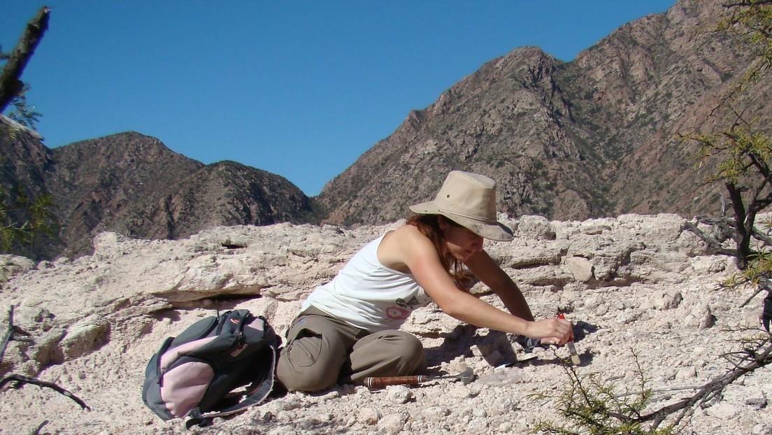 Descubren en Argentina una nueva especie de rincosaurio de cerca de 230 millones de años de antigüedad
