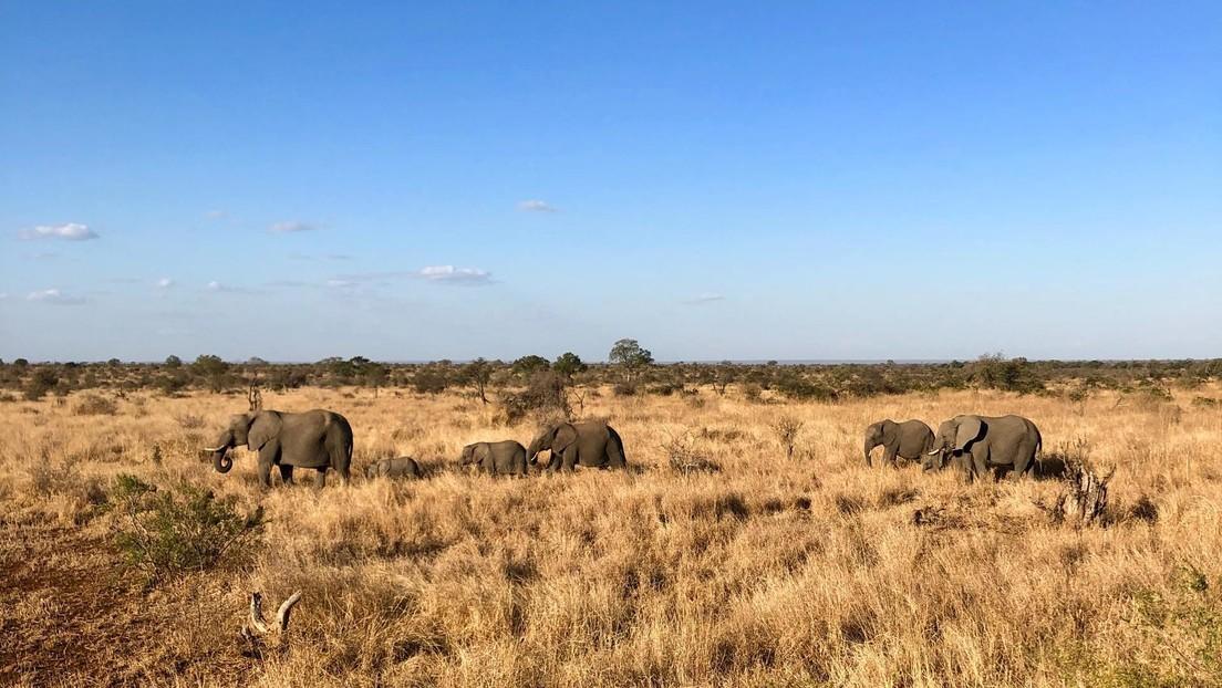 """Un británico invita a 3.000 cazadores a África afirmando que los animales """"son abundantes"""" por la pandemia"""