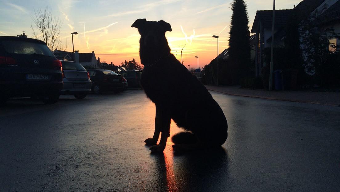 Un perro muerde a dos niñas en plena calle (y los vecinos se vengan de la persona equivocada)