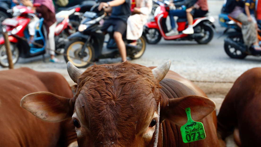 VIDEOS: Una vaca se cuela en la sala de urgencias de un hospital en Colombia y embiste contra los pacientes