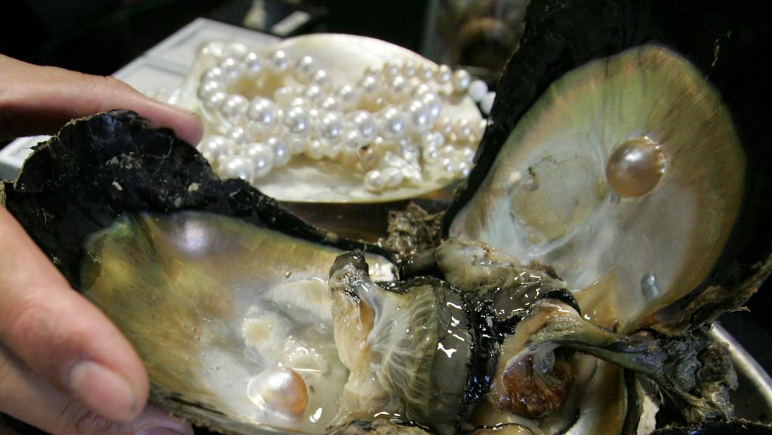 Una familia de Tailandia encuentra una rara perla color naranja mientras comía un caracol marino