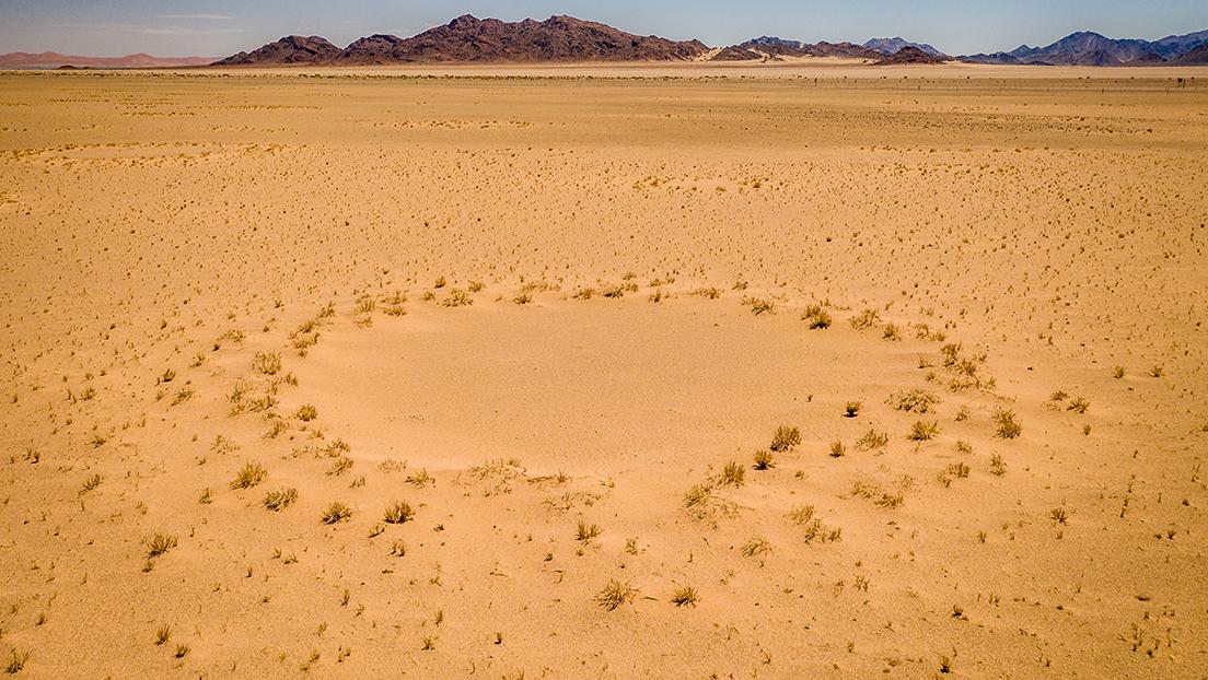 Resuelven el enigma de los círculos de hadas en el desierto del Namib