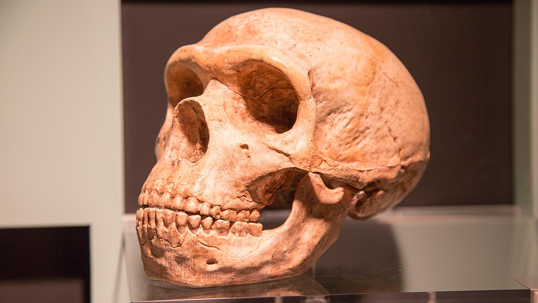 Descubren que las personas con un grupo de genes neandertales tienen menor riesgo de padecer un covid-19 grave
