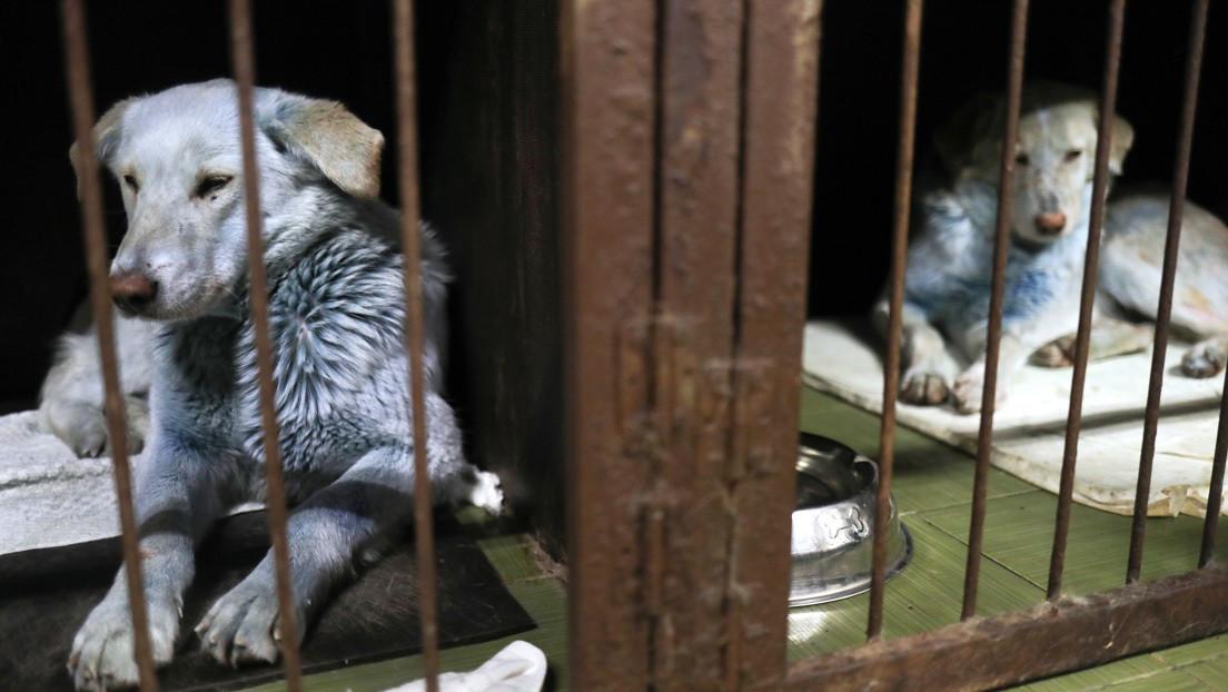FOTO: Aparece un perro callejero rosado en la misma ciudad rusa donde fueron avistados canes azules