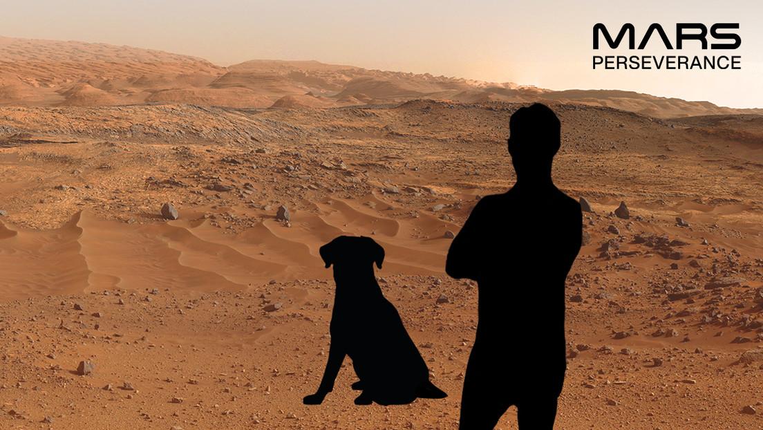 Gatos y Bernie Sanders 'colonizan' Marte gracias a una curiosa función lanzada por la NASA (FOTOS)