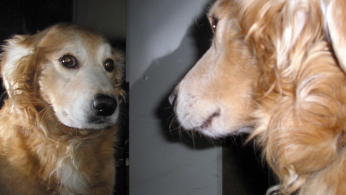 Una curiosa prueba descubre en perros una habilidad previamente desconocida