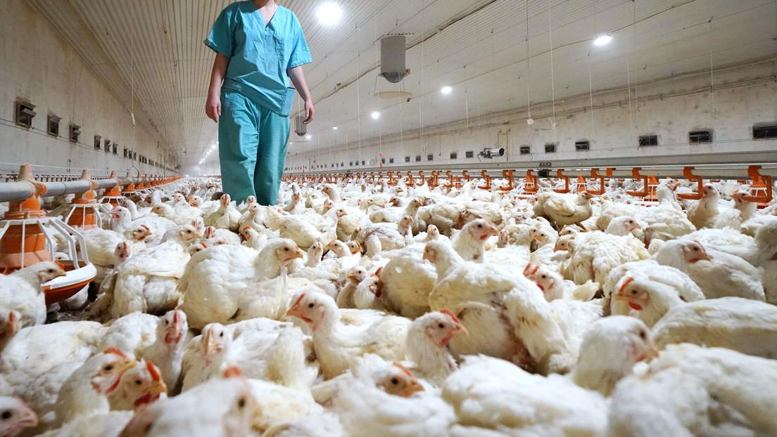 Rusia reporta los primeros casos del mundo de gripe aviar H5N8 en humanos