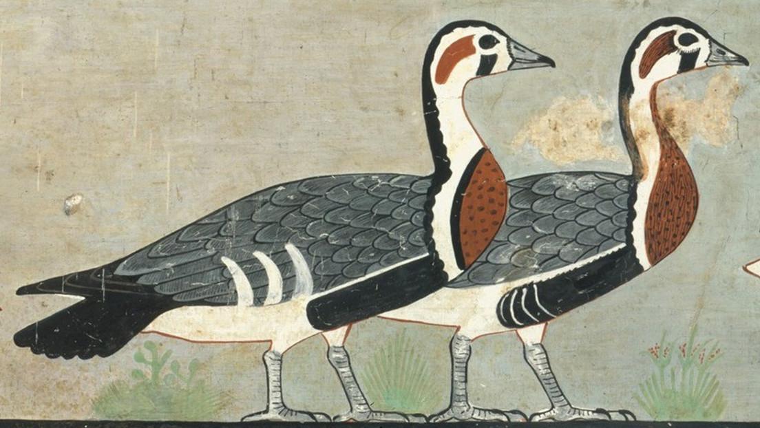 Identifican una especie desconocida de gansos en una pintura egipcia de hace 4.600 años