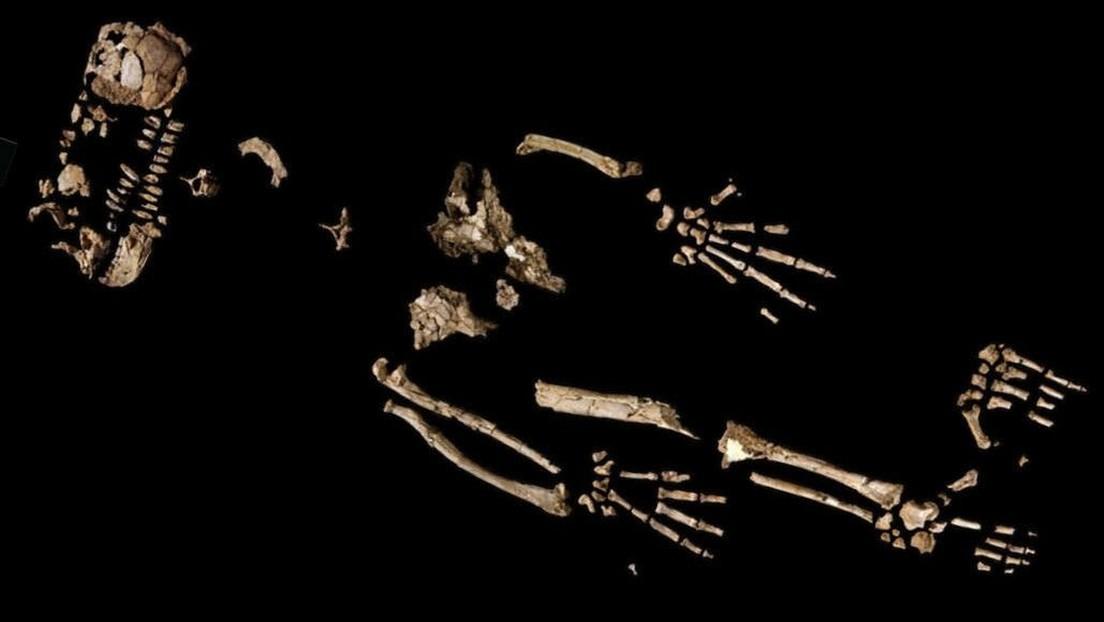 Los restos de un primate de hace 4,4 millones de años evidenciarían un 'salto evolutivo' hacia la fabricación de herramientas y el caminar erguido