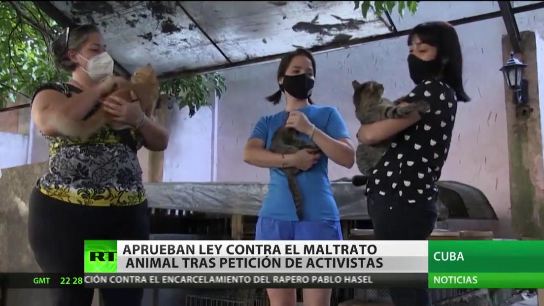 Cuba aprueba la ley contra el maltrato de los animales tras la petición de activistas