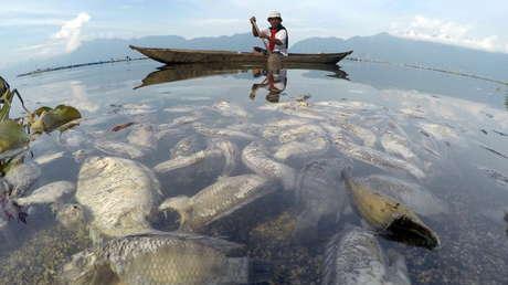 Una tercera parte de los peces de agua dulce se enfrentan a la extinción