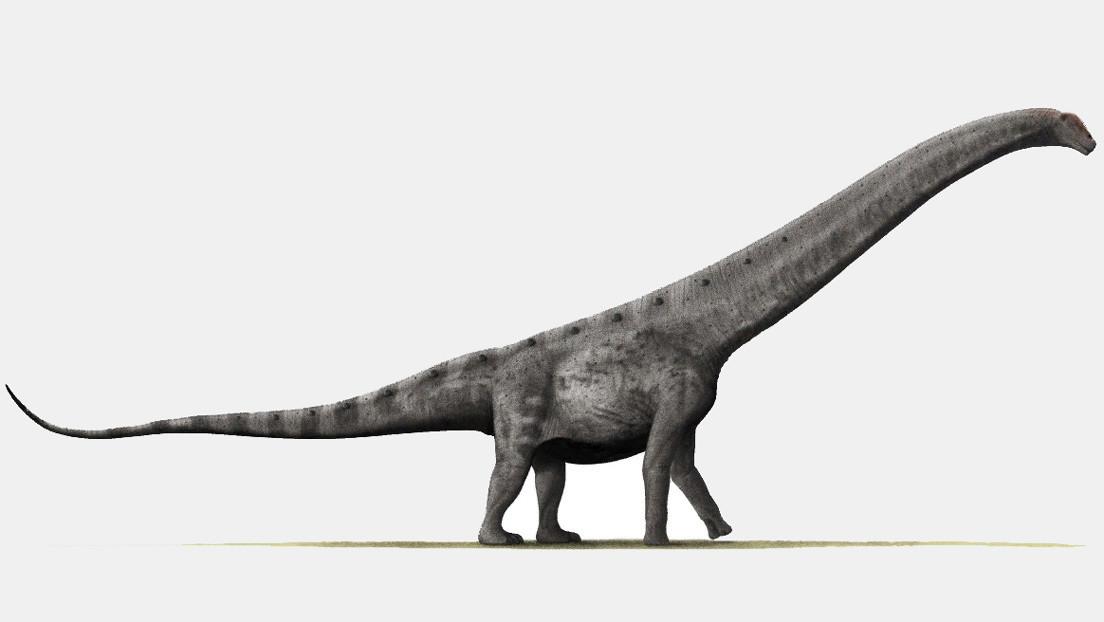 Un dinosaurio hallado en Argentina podría ser el titanosaurio más antiguo jamás descubierto