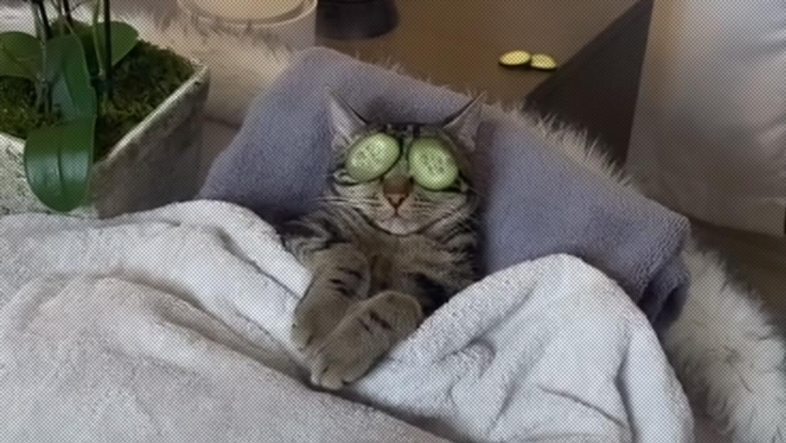 VIDEO: Un gato 'adicto al spa' defiende con uñas y dientes sus sesiones de relajación