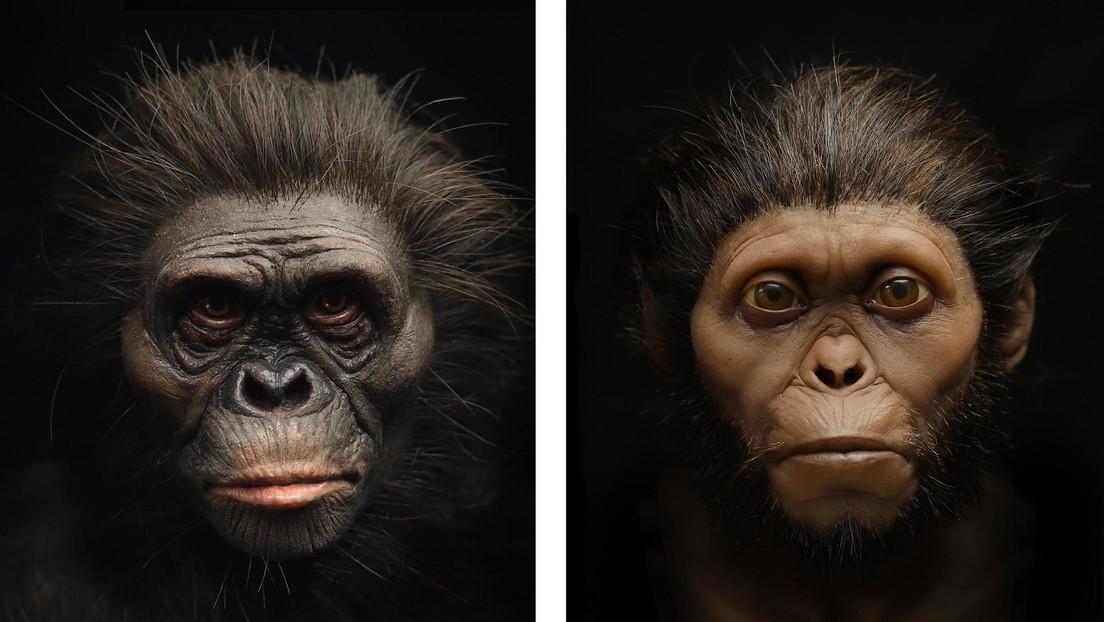 Reconstruyen el rostro de 'Lucy', nuestra antepasada australopiteca, y explican en qué fallaron los museos