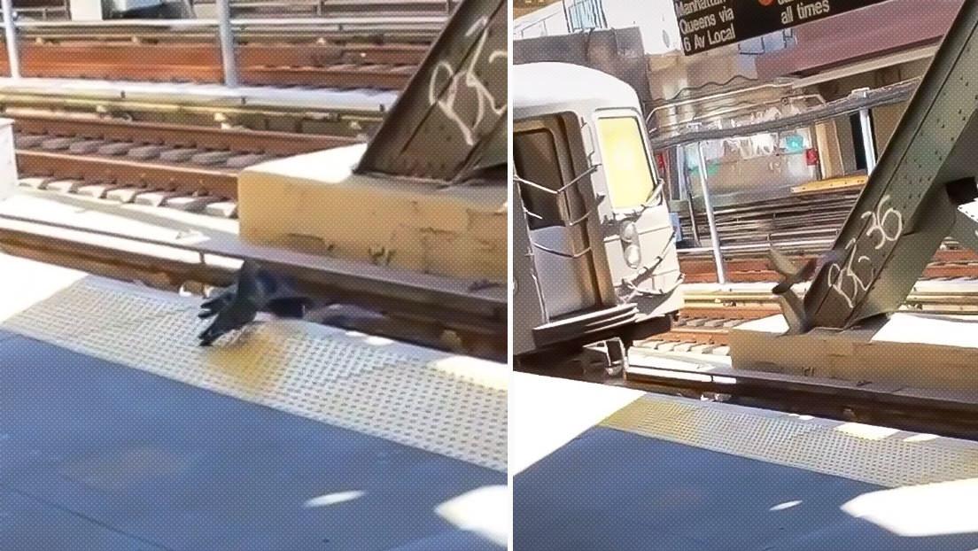 """""""Solo en Nueva York"""": dos palomas asesinan a su 'amiga' empujándola a las vías del tren"""