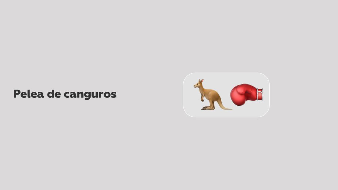 VIDEO: Dos canguros se enzarzan en una pelea en medio de una carretera de Australia