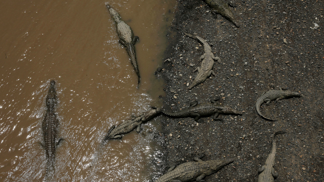 La Policía sudafricana emprende una búsqueda masiva de cocodrilos que se fugaron de una granja