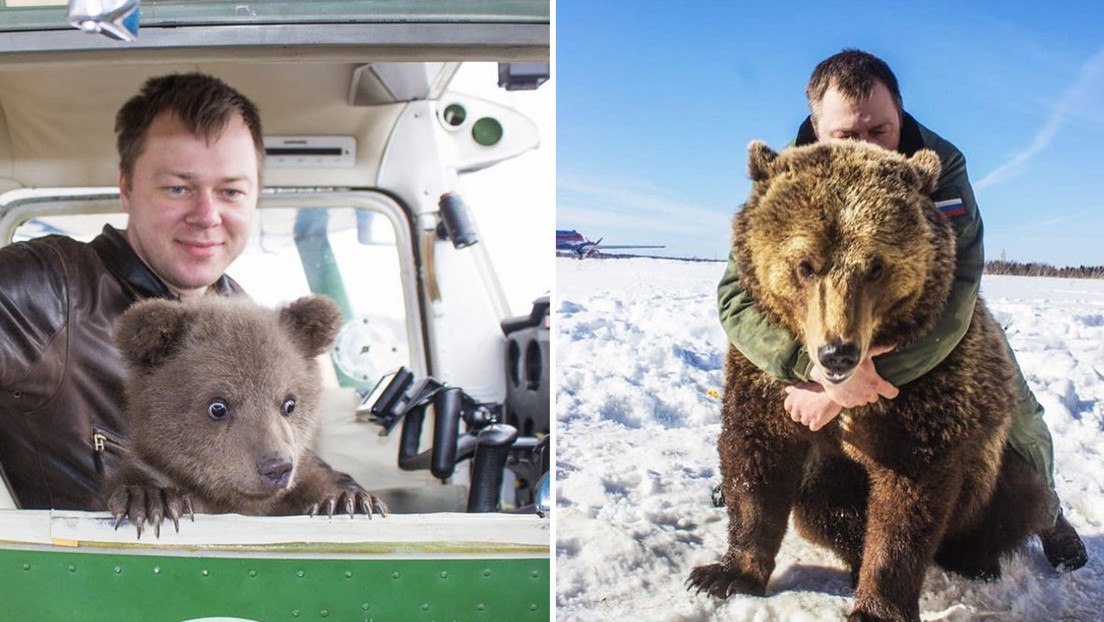 El osezno adoptado por aviadores rusos se convierte en estrella de las redes sociales