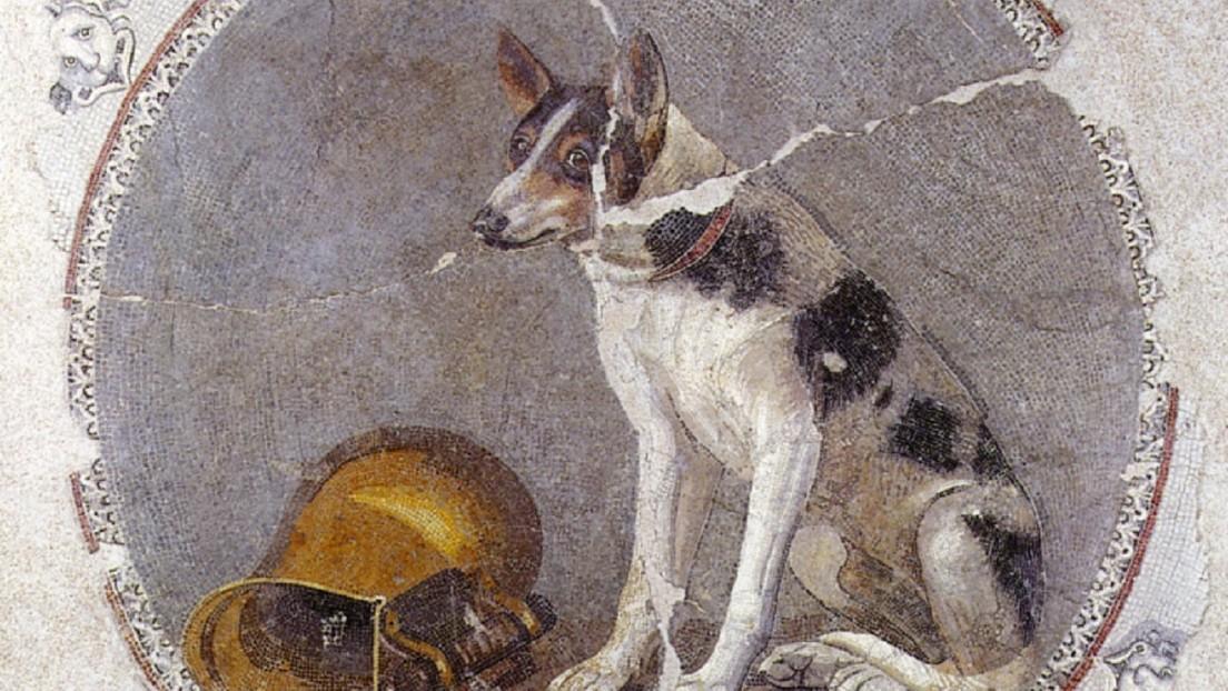 Identifican mascotas entre los animales enterrados hace 1.900 años en un cementerio de Egipto